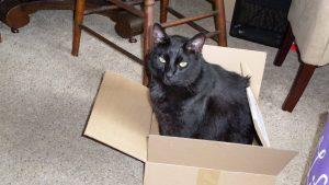 Box Inspector duties