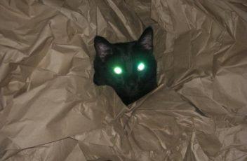 Spooky Halloween Kitty